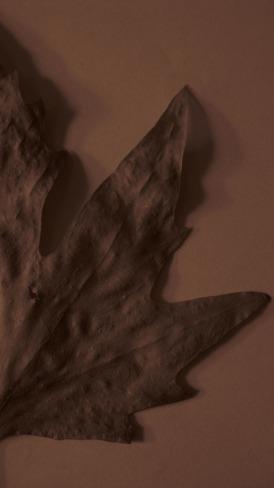 autumn Leaf sepia